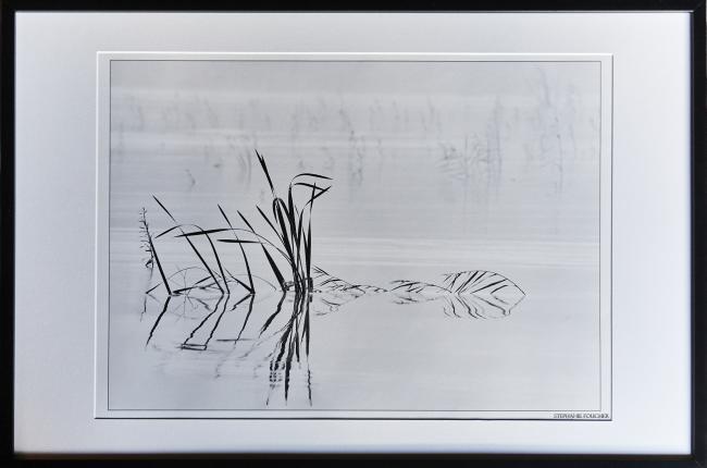 Photographie 'Calligraphie des Roseaux ' encadré 91 x 61 cm